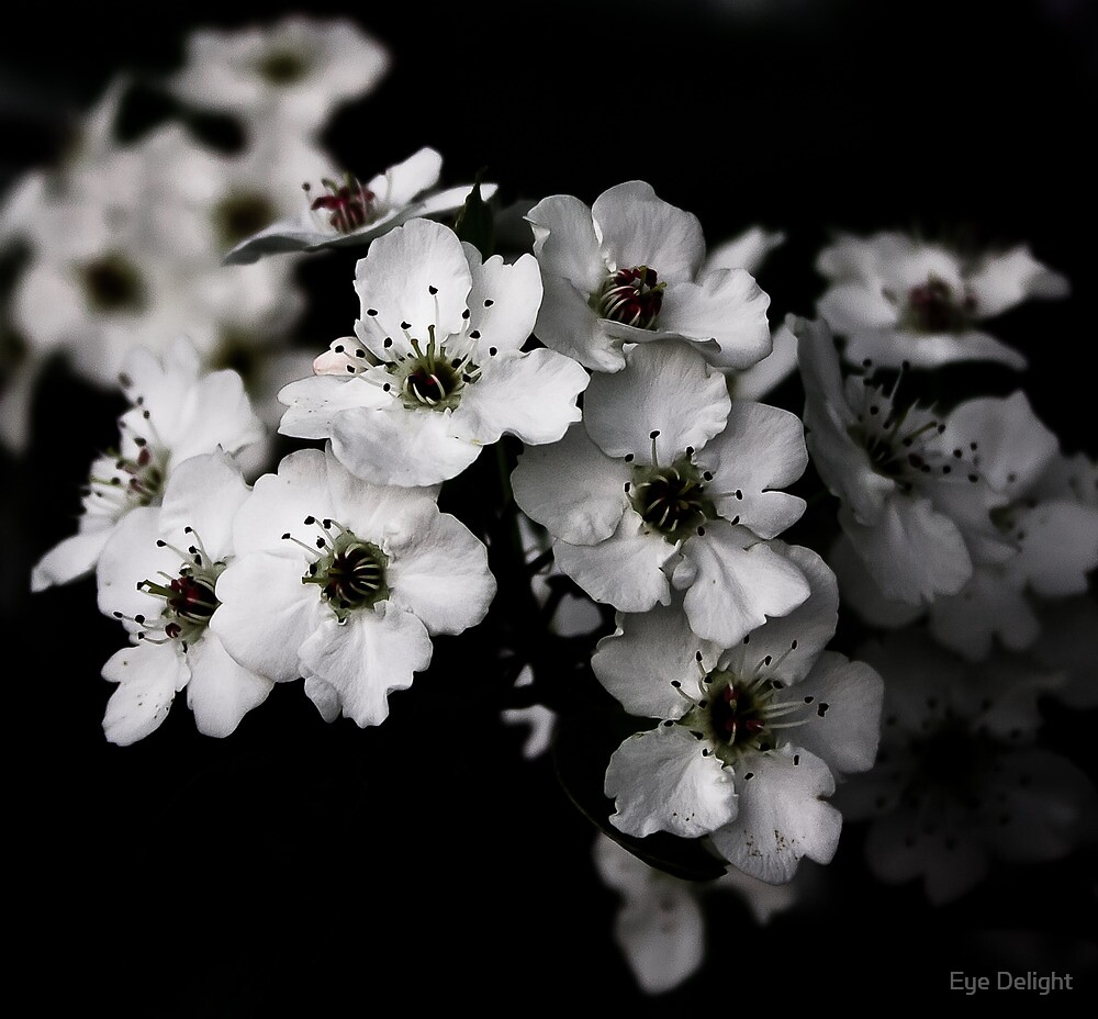 I Blossom by Eye Delight