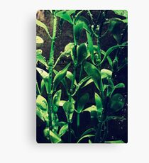 Natural Canvas Print