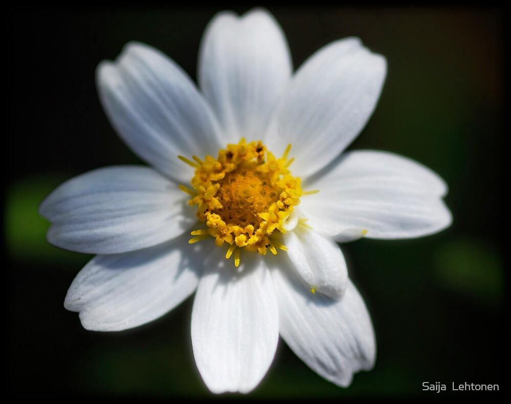 Flowers are Sunshine by Saija  Lehtonen