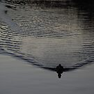 Duck Vibrations by Graham Mewburn