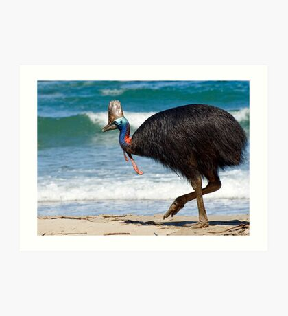 Strolling by - cassowary on the beach Art Print