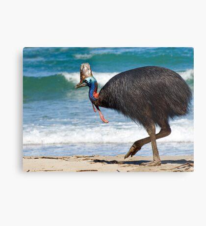 Strolling by - cassowary on the beach Metal Print