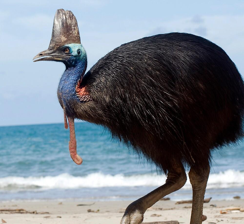 Beach Comber - cassowary at Etty Bay by Jenny Dean