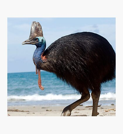 Beach Comber - cassowary at Etty Bay Photographic Print