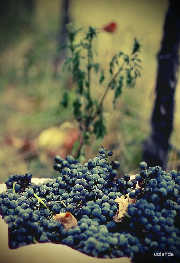 Ready for Wine by yolanda