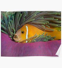 I like my anemone Poster