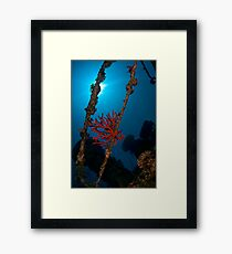 Sponge at the wreck -Cedar Pride- Framed Print
