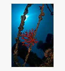 Sponge at the wreck -Cedar Pride- Photographic Print