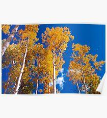 Golden Aspens of Owl Creek Pass Poster