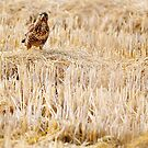 The falcon by FOTIS MAVROUDAKIS