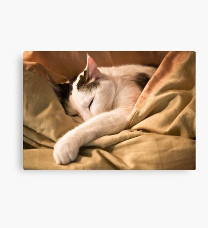 Mama's Bed Is Best! Canvas Print