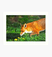 Stealthy Fox Art Print