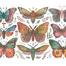 Butterflies and Moths collection by Vlad Stankovic