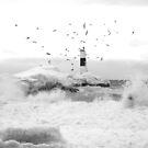 freezing gulls by rljphotography
