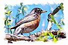 Robin - watercolour by PhotosByHealy