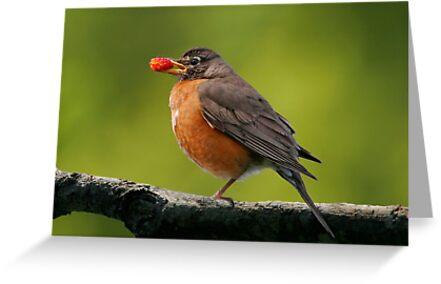 American Robin by Martin Smart