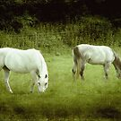 2 Beauties in the meadow ©  by Dawn Becker