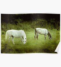 2 Beauties in the meadow ©  Poster