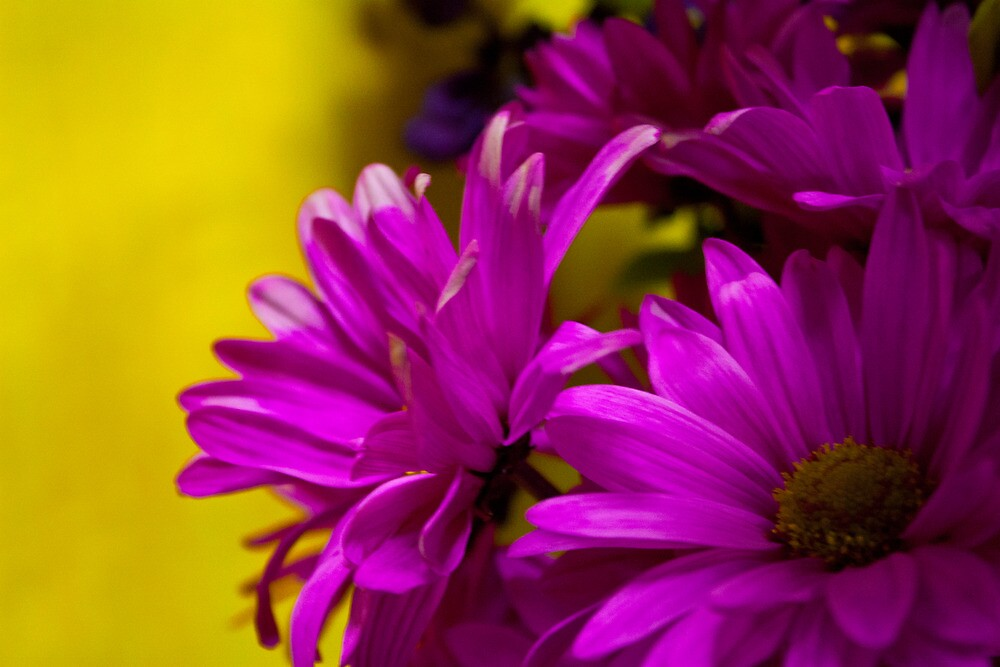Beautiful Flowers of Ours by C Rodriguez
