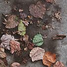 leaves by Tiffany Bauer