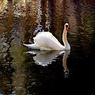 "New "" Swan Lake "" by Brian Bo Mei"