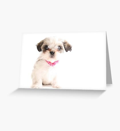 Baby Shih Tzu Greeting Card