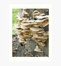 Colony of Whatsis Fungi Art Print