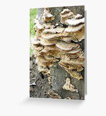 Colony of Whatsis Fungi Greeting Card