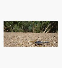 Sapphire Dragonfly Photographic Print