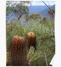 Bottlebrush Mountains Poster