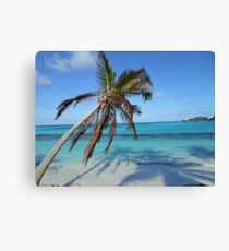 Anguilla Palm Tree and Ocean Canvas Print