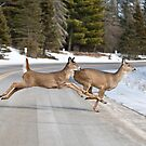 Minnesota Driving by Chris Putnam