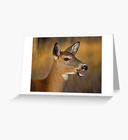 Profile of a Deer Greeting Card