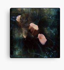 Piggy Ears Canvas Print