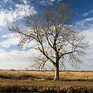 Fen Land Tree by Robert Ellis