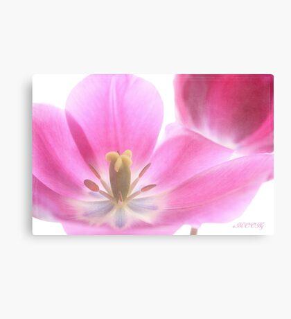 Pink tulip 2 Canvas Print