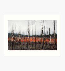 Undergrowth after a Brushfire- Oregon Plateau Art Print