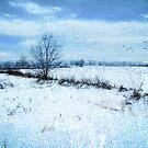 Winter Blues by John Rivera