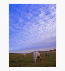 Cornwall: Ponies in the Evening Light Photographic Print