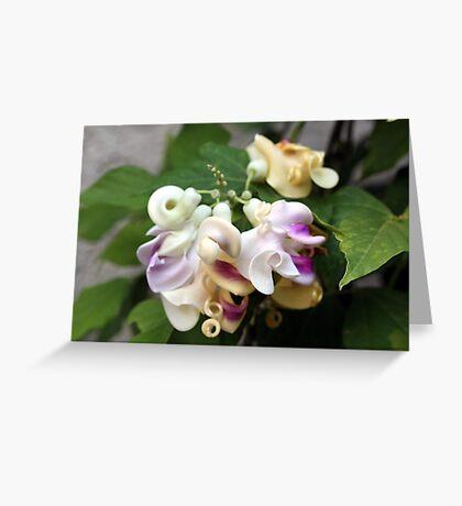 Corkscrew flowers  Greeting Card