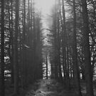 No Short Cut Through The Trees by Lou Wilson