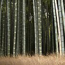 Imperial Bamboo, Kyoto, Japan by johnrf
