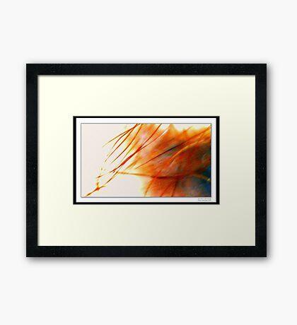 Memory of Primrose Path Framed Print