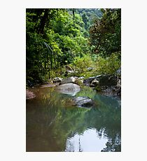 Jungle stepping stones Photographic Print