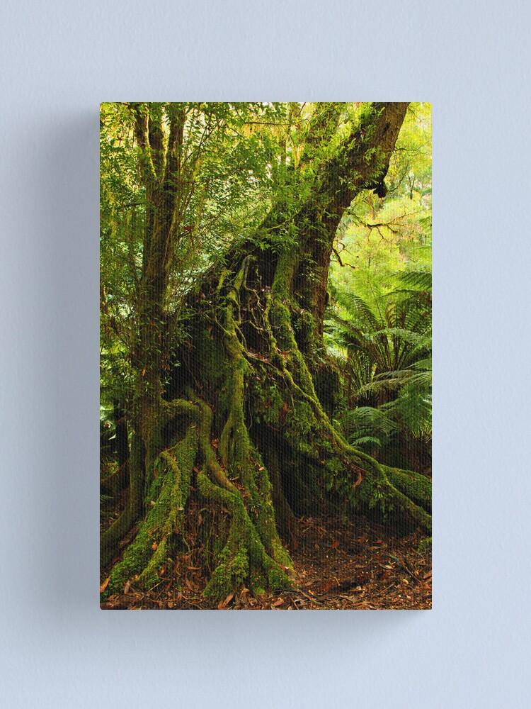 Alternate view of Rainforest Trail Canvas Print