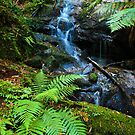 Mountain Stream - Tarra Valley by Greg Earl