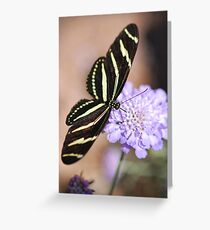 Zebra Butterfly  Greeting Card