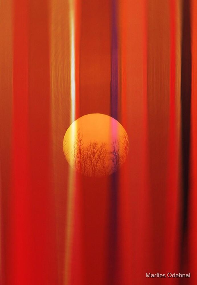 Sunbeams by Marlies Odehnal