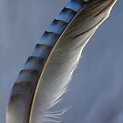 Feather magic by Sue Purveur