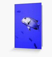 Bigeye Emperor Fish in the Red Sea Greeting Card